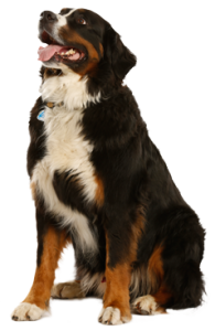 trans_dog